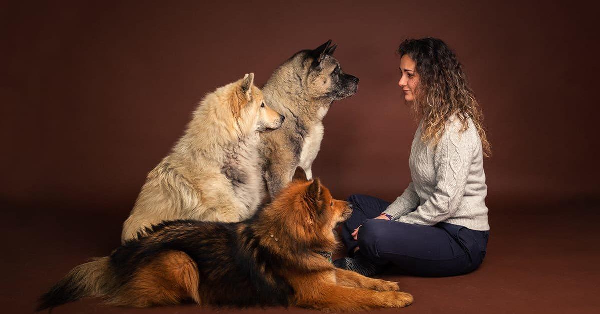 Accueil OSmoz 85 - Centre d'éducation canine en Vendée